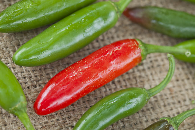 The Serrano Pepper Incident 7