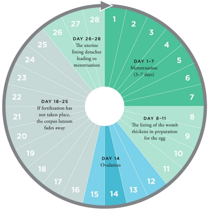 Improve Your Sex Life By Tracking Your Monthly Cycle 6
